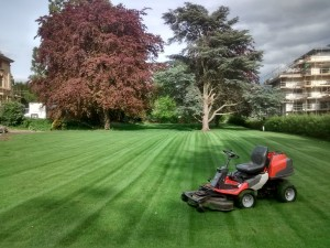 Mower & Turf After