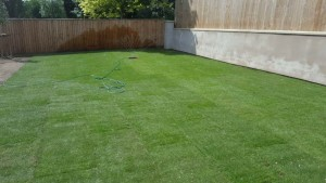 Lovely Lawn Finish
